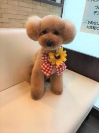 2019-8-29河口むぎちゃん②